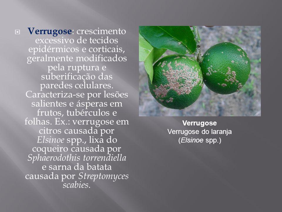 Verrugose : crescimento excessivo de tecidos epidérmicos e corticais, geralmente modificados pela ruptura e suberificação das paredes celulares. Carac