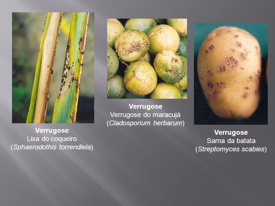 Verrugose Lixa do coqueiro (Sphaerodothis torrendiela) Verrugose Verrugose do maracujá (Cladosporium herbarum) Verrugose Sarna da batata (Streptomyces