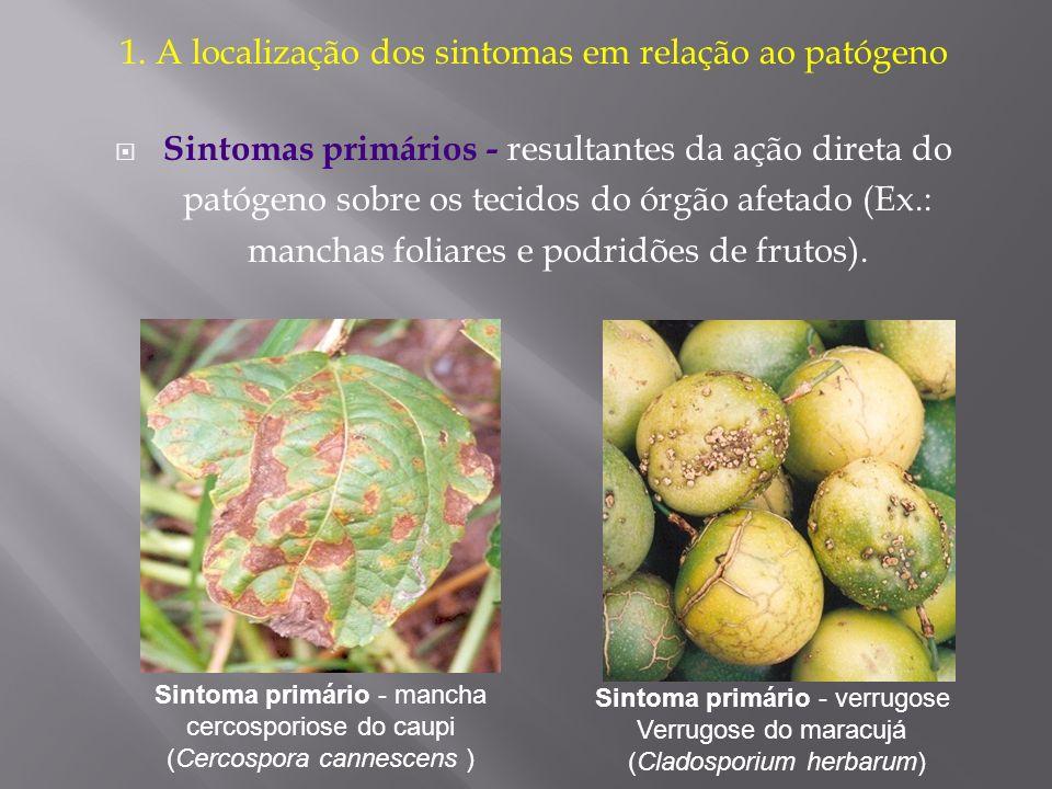 1. A localização dos sintomas em relação ao patógeno Sintomas primários - resultantes da ação direta do patógeno sobre os tecidos do órgão afetado (Ex