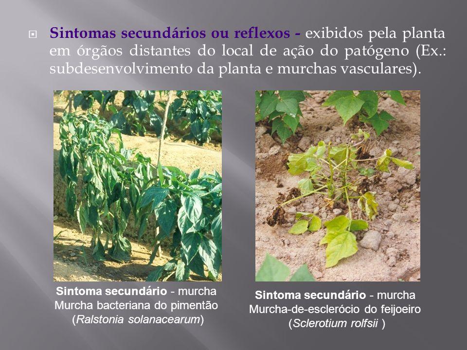 Sintomas secundários ou reflexos - exibidos pela planta em órgãos distantes do local de ação do patógeno (Ex.: subdesenvolvimento da planta e murchas