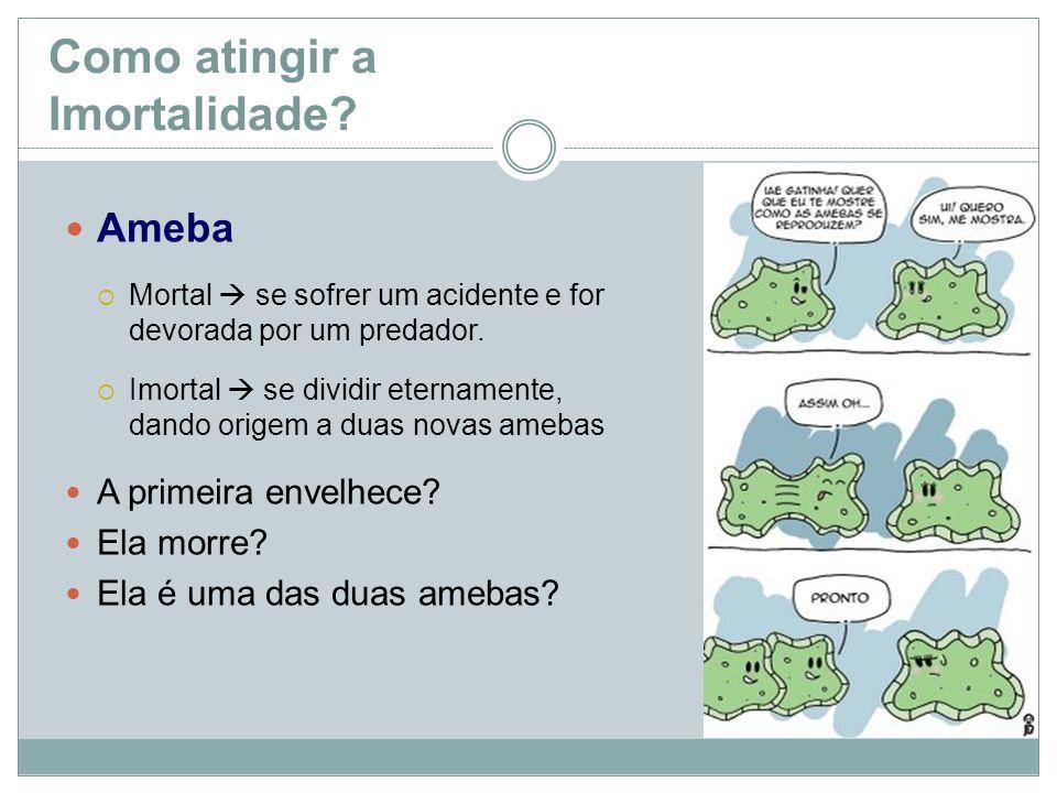 Como atingir a Imortalidade? Ameba Mortal se sofrer um acidente e for devorada por um predador. Imortal se dividir eternamente, dando origem a duas no