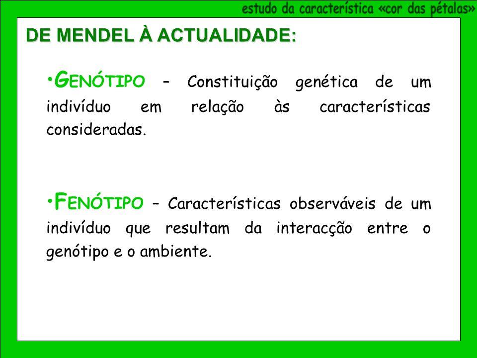 G ENÓTIPO – Constituição genética de um indivíduo em relação às características consideradas.