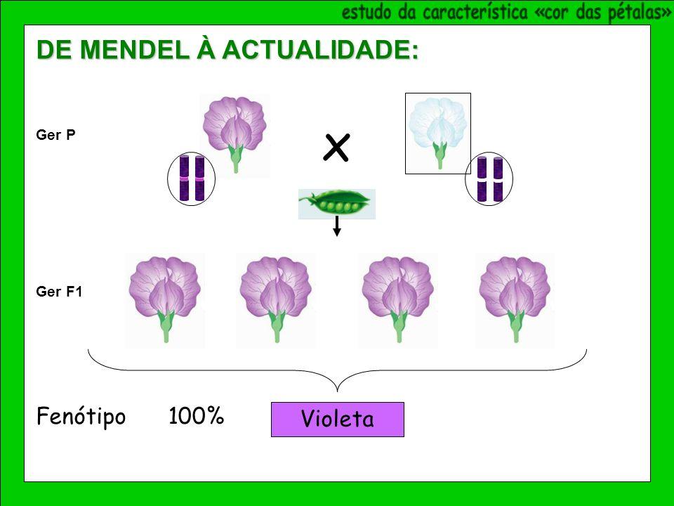 Violeta 100%Fenótipo Ger F1 x Ger P DE MENDEL À ACTUALIDADE: