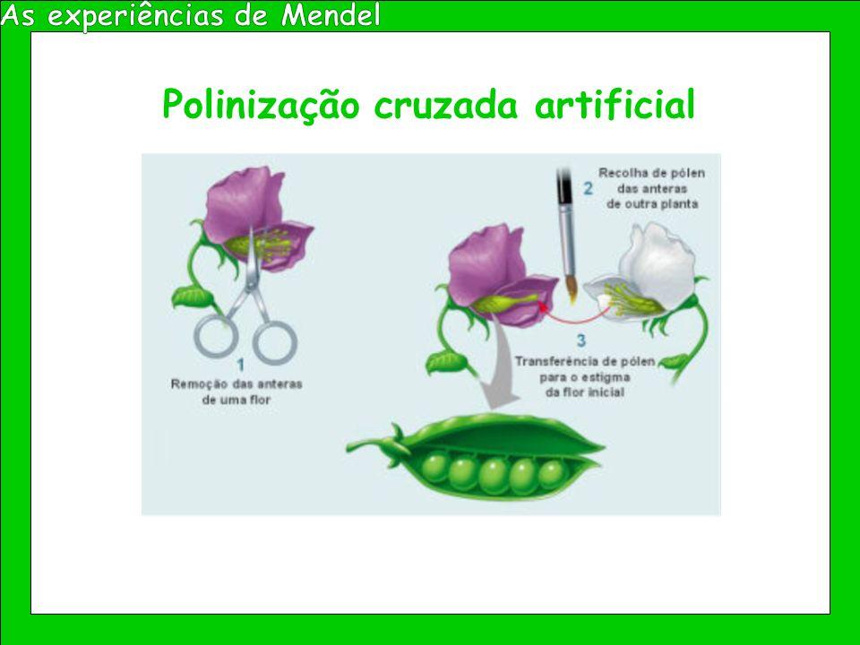 Polinização cruzada artificial