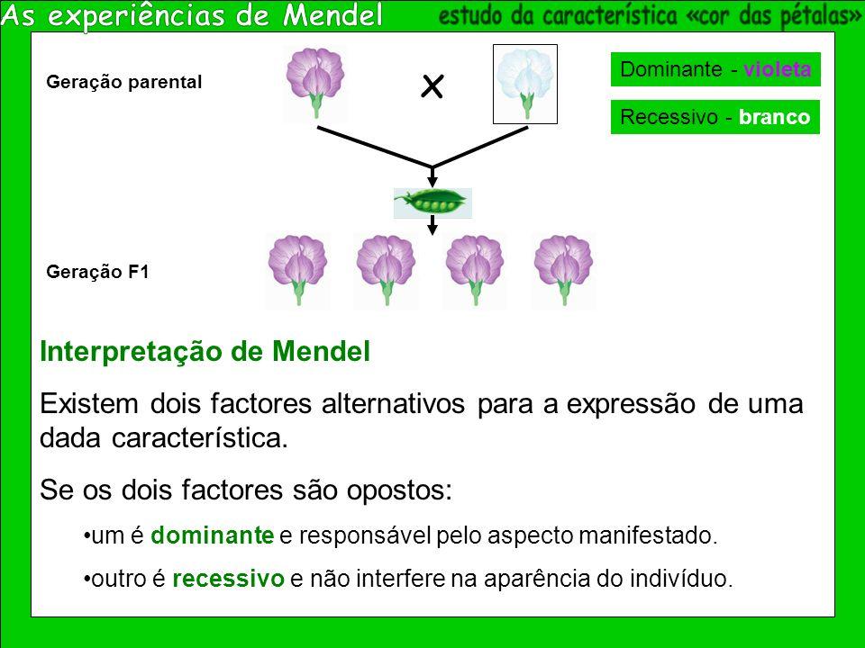 x Geração parental Geração F1 Interpretação de Mendel Existem dois factores alternativos para a expressão de uma dada característica.