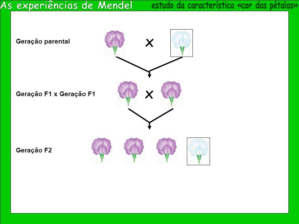 x Geração parental Geração F1 x Geração F1 x Geração F2