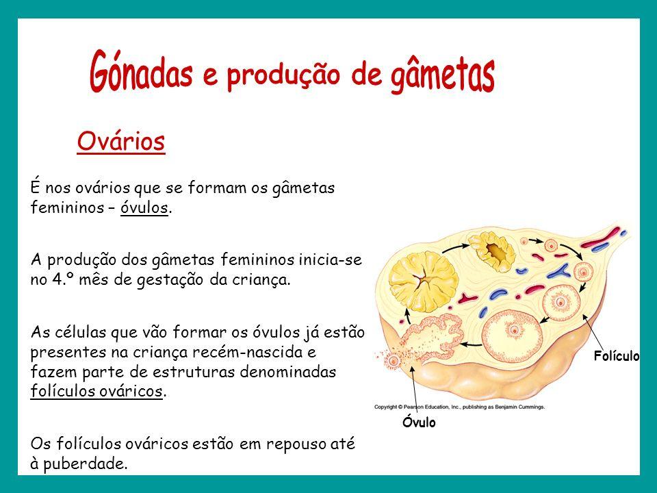 Ovários É nos ovários que se formam os gâmetas femininos – óvulos. A produção dos gâmetas femininos inicia-se no 4.º mês de gestação da criança. As cé