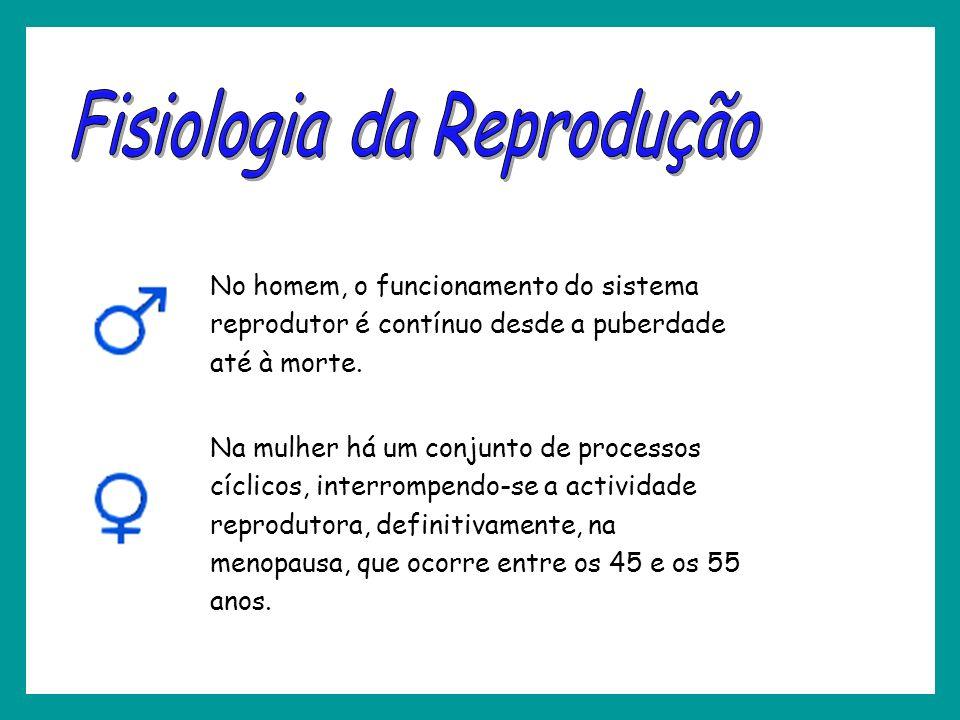 No homem, o funcionamento do sistema reprodutor é contínuo desde a puberdade até à morte. Na mulher há um conjunto de processos cíclicos, interrompend