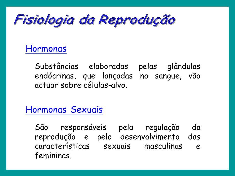 Hormonas Substâncias elaboradas pelas glândulas endócrinas, que lançadas no sangue, vão actuar sobre células-alvo. Hormonas Sexuais São responsáveis p