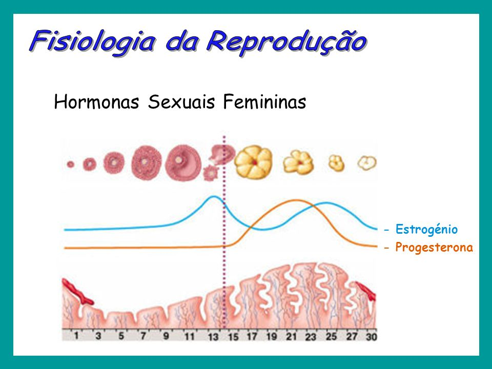 Hormonas Sexuais Femininas - Progesterona - Estrogénio