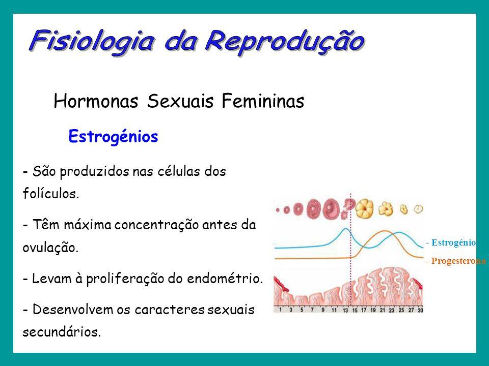 - São produzidos nas células dos folículos. - Têm máxima concentração antes da ovulação. - Levam à proliferação do endométrio. - Desenvolvem os caract