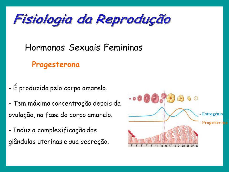 - Estrogénio - Progesterona Hormonas Sexuais Femininas - É produzida pelo corpo amarelo. - Tem máxima concentração depois da ovulação, na fase do corp