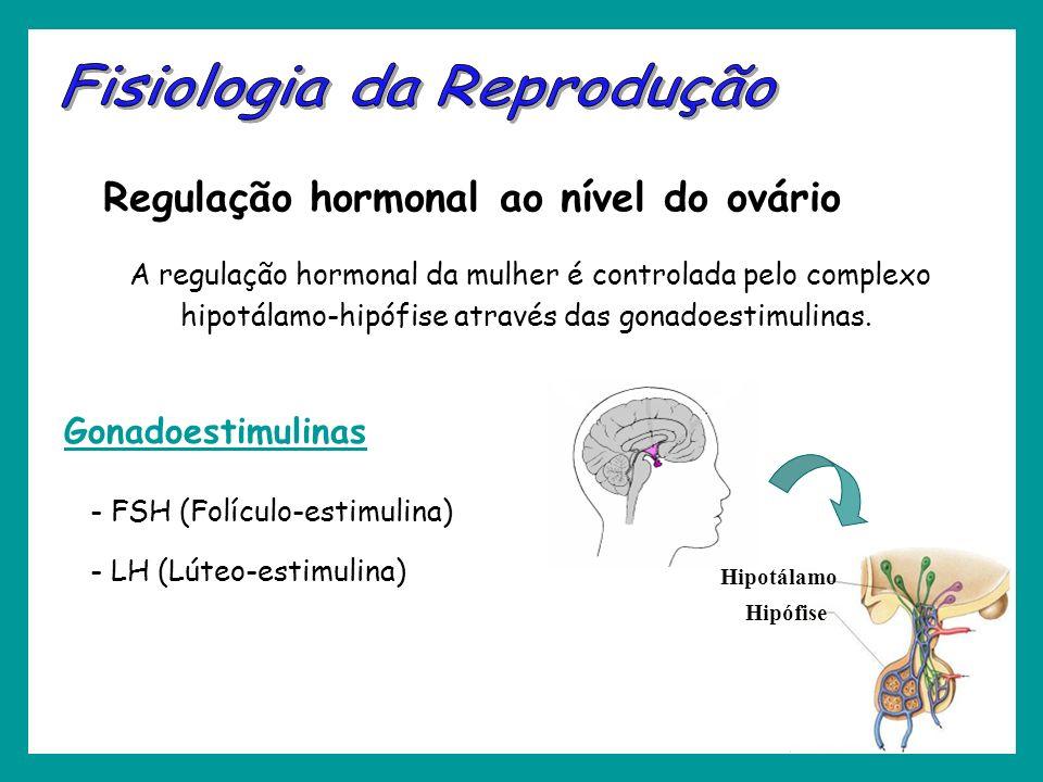 A regulação hormonal da mulher é controlada pelo complexo hipotálamo-hipófise através das gonadoestimulinas. Regulação hormonal ao nível do ovário Hip