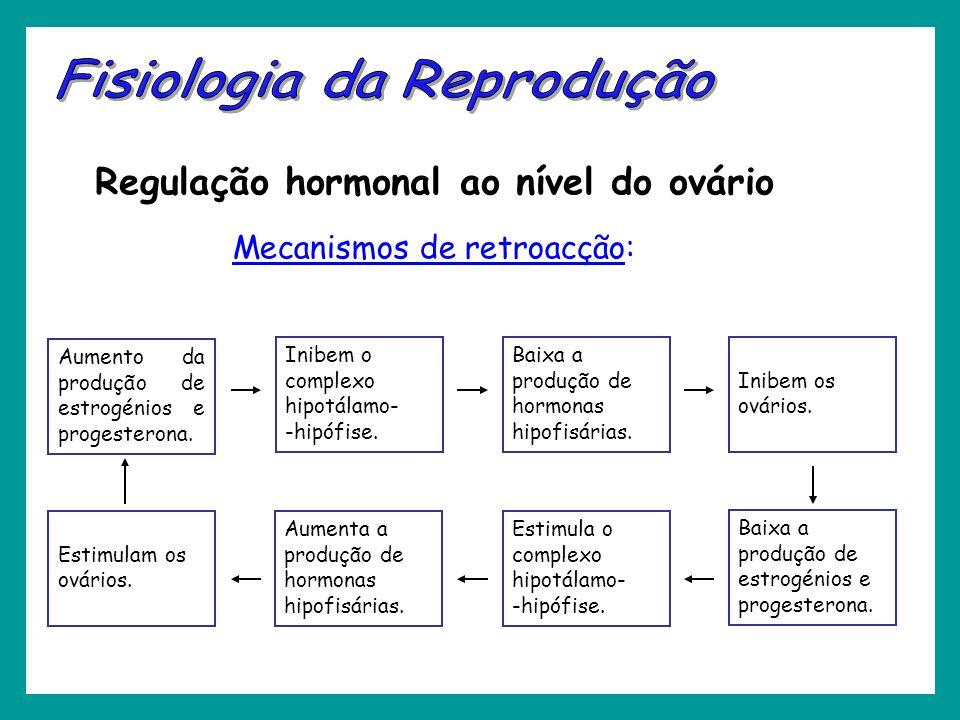 Regulação hormonal ao nível do ovário Mecanismos de retroacção: Aumento da produção de estrogénios e progesterona. Inibem o complexo hipotálamo- -hipó