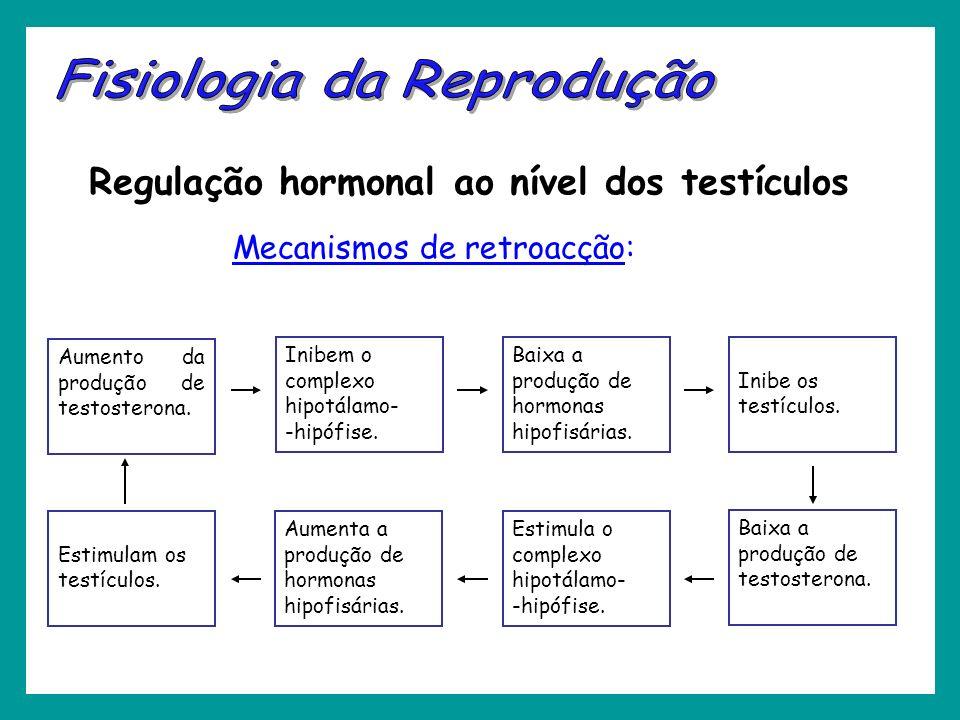 Regulação hormonal ao nível dos testículos Mecanismos de retroacção: Aumento da produção de testosterona. Inibem o complexo hipotálamo- -hipófise. Bai