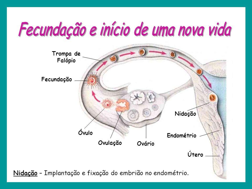 Ovário Ovulação Óvulo Fecundação Trompa de Falópio Útero Endométrio Nidação Nidação – Implantação e fixação do embrião no endométrio.