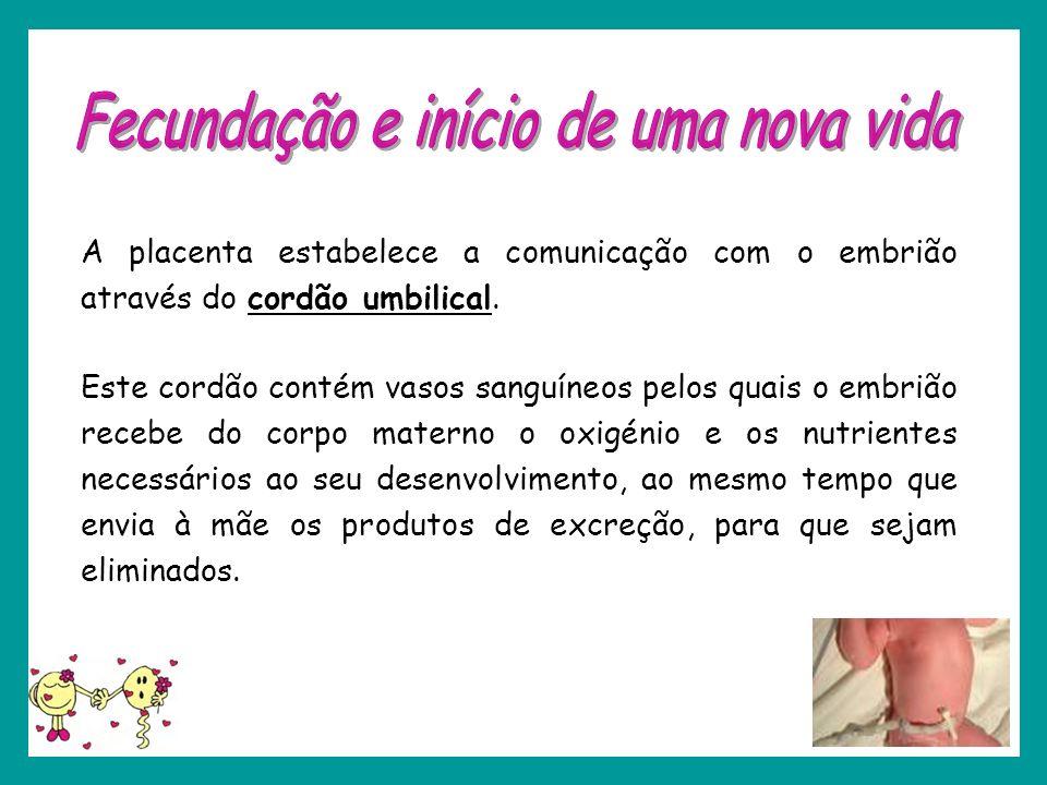 A placenta estabelece a comunicação com o embrião através do cordão umbilical. Este cordão contém vasos sanguíneos pelos quais o embrião recebe do cor