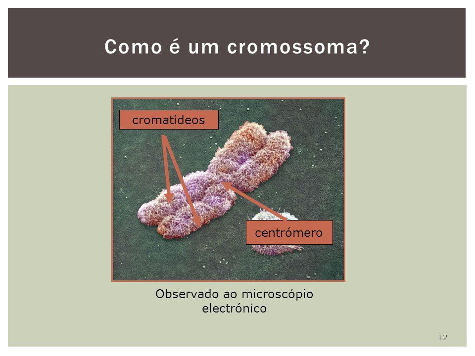 12 Como é um cromossoma? Observado ao microscópio electrónico cromatídeos centrómero