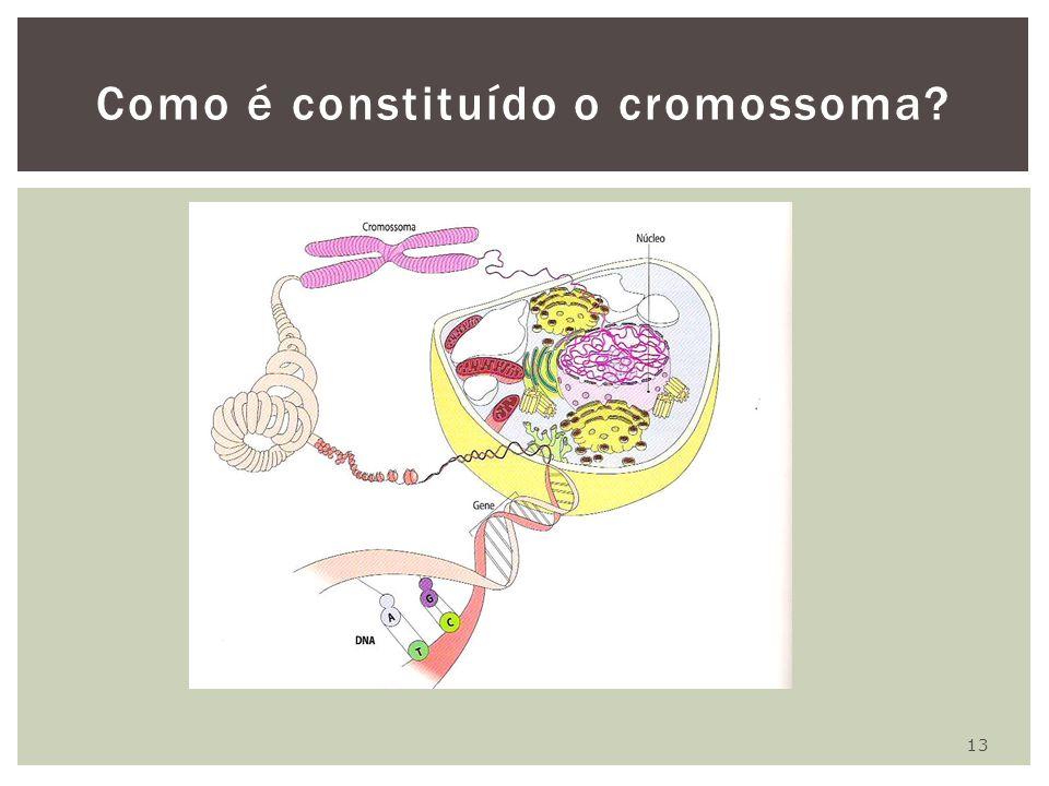 13 Como é constituído o cromossoma?