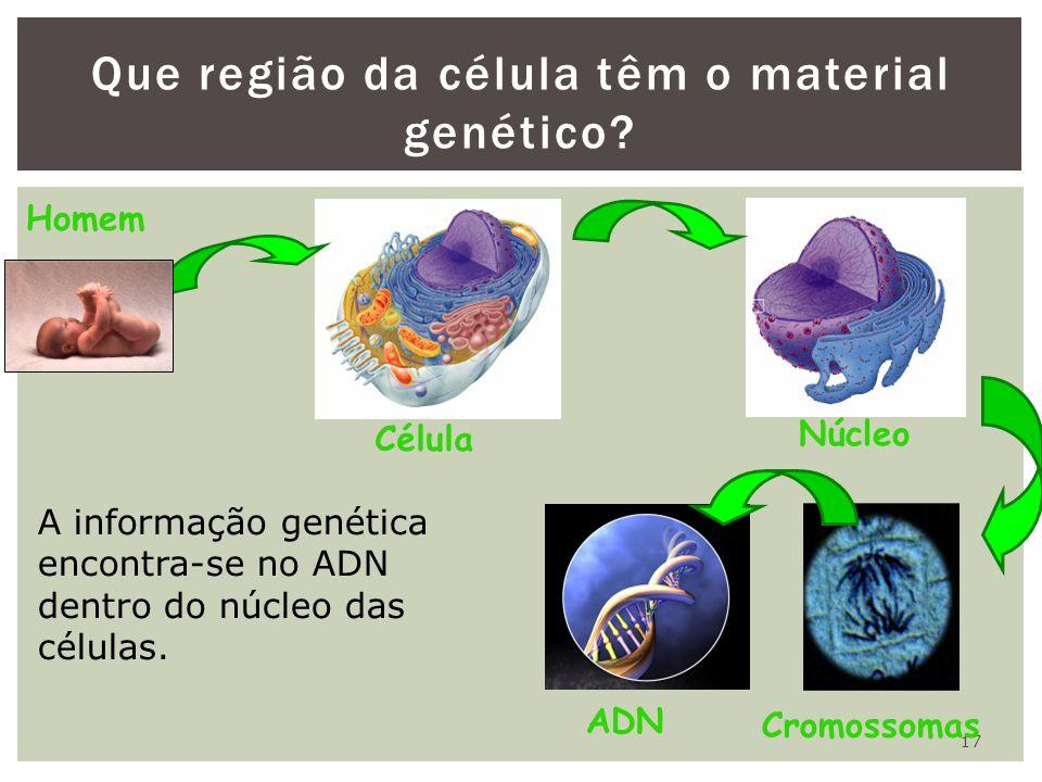 17 Que região da célula têm o material genético? Célula Núcleo Cromossomas Homem ADN A informação genética encontra-se no ADN dentro do núcleo das cél