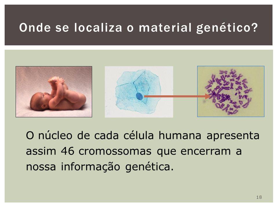 18 Onde se localiza o material genético? O núcleo de cada célula humana apresenta assim 46 cromossomas que encerram a nossa informação genética.