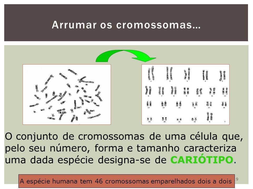 19 Arrumar os cromossomas… CARIÓTIPO O conjunto de cromossomas de uma célula que, pelo seu número, forma e tamanho caracteriza uma dada espécie design