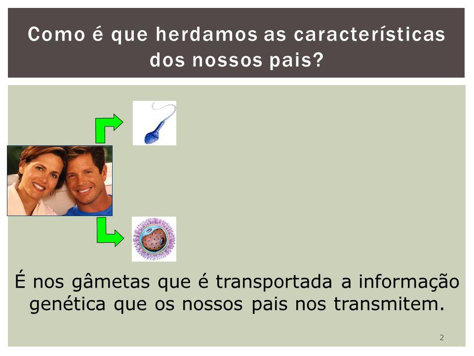 2 Como é que herdamos as características dos nossos pais? É nos gâmetas que é transportada a informação genética que os nossos pais nos transmitem.