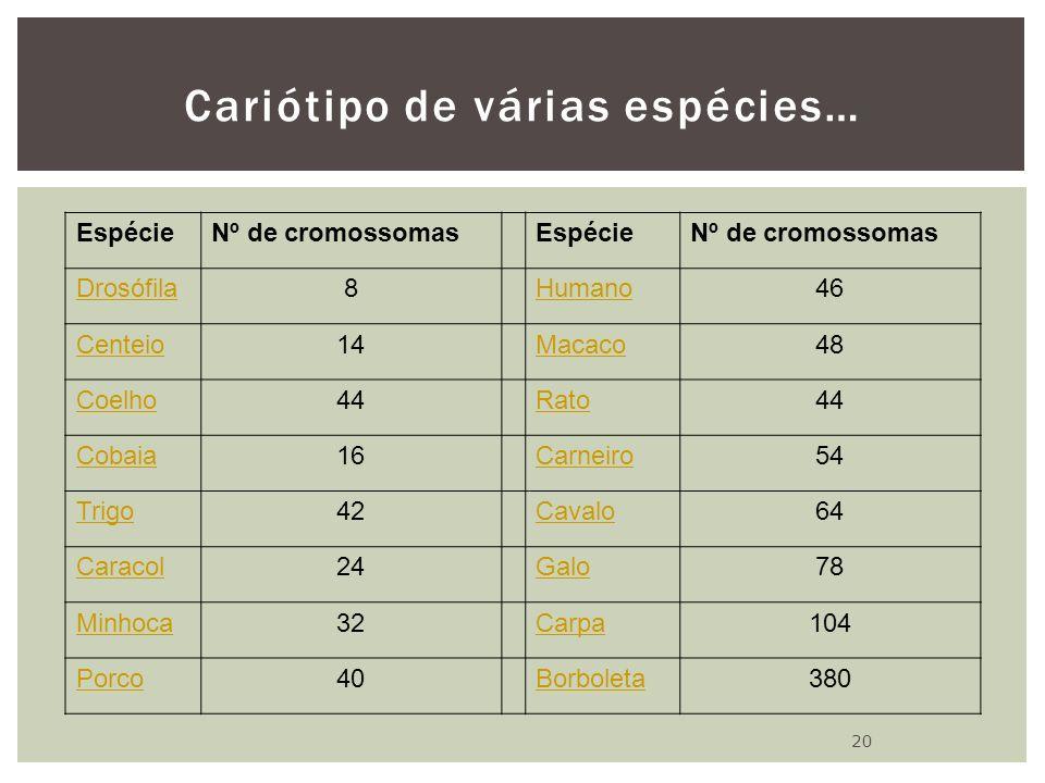Cariótipo de várias espécies… EspécieNº de cromossomasEspécieNº de cromossomas Drosófila8Humano46 Centeio14Macaco48 Coelho44Rato44 Cobaia16Carneiro54