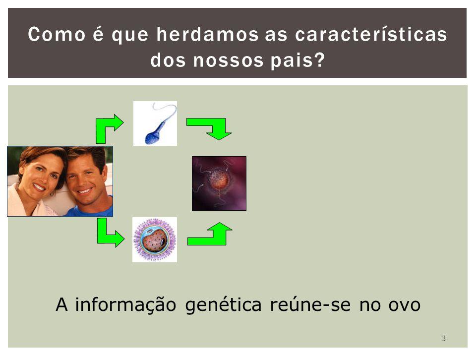 3 Como é que herdamos as características dos nossos pais? A informação genética reúne-se no ovo