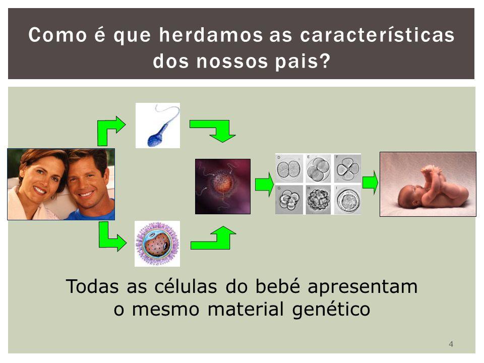 4 Como é que herdamos as características dos nossos pais? Todas as células do bebé apresentam o mesmo material genético