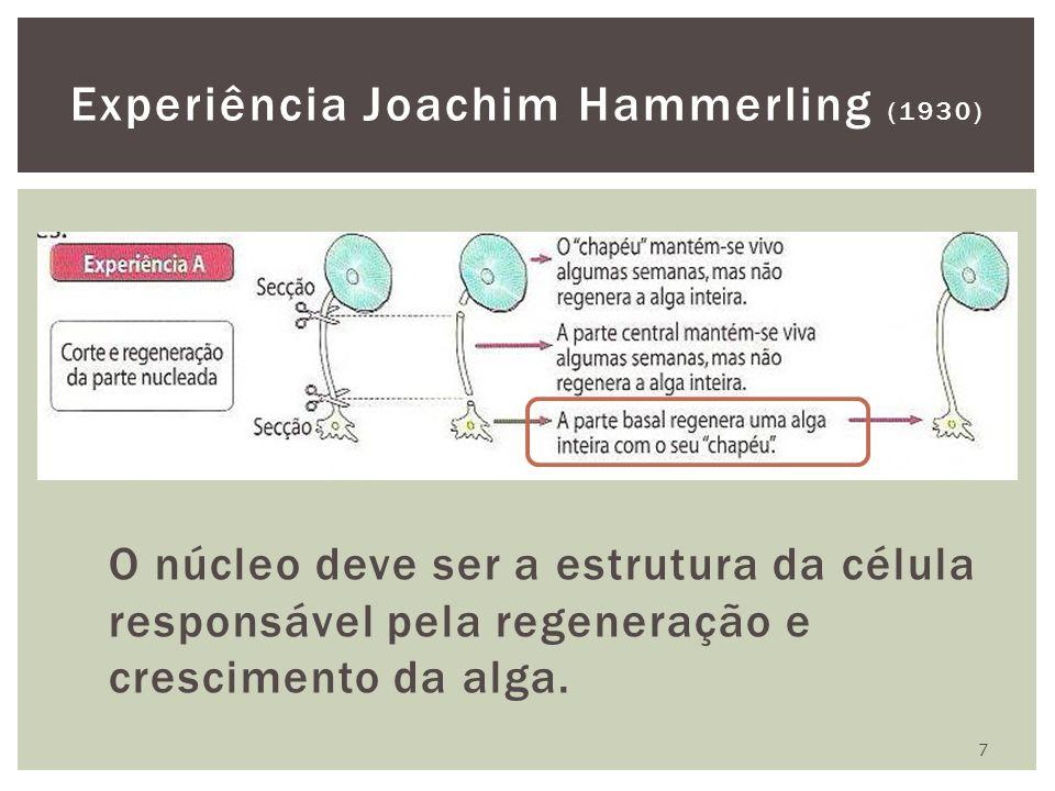 O núcleo deve ser a estrutura da célula responsável pela regeneração e crescimento da alga. 7 Experiência Joachim Hammerling (1930)
