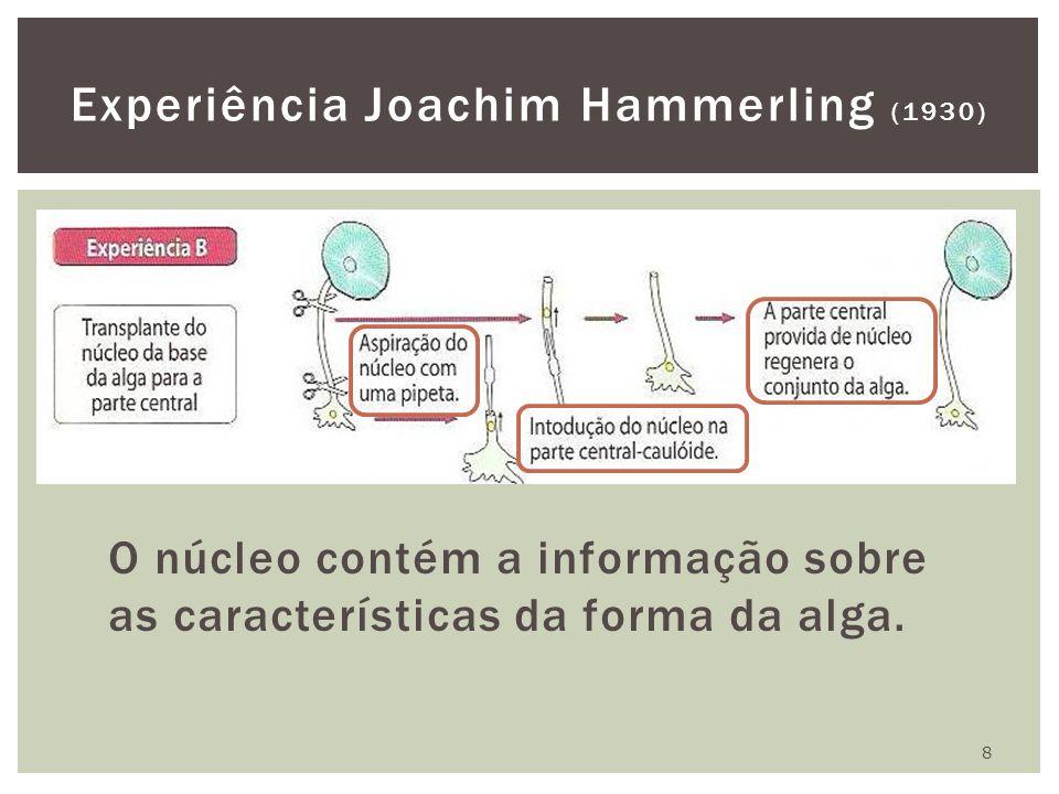 O núcleo contém a informação sobre as características da forma da alga. 8 Experiência Joachim Hammerling (1930)