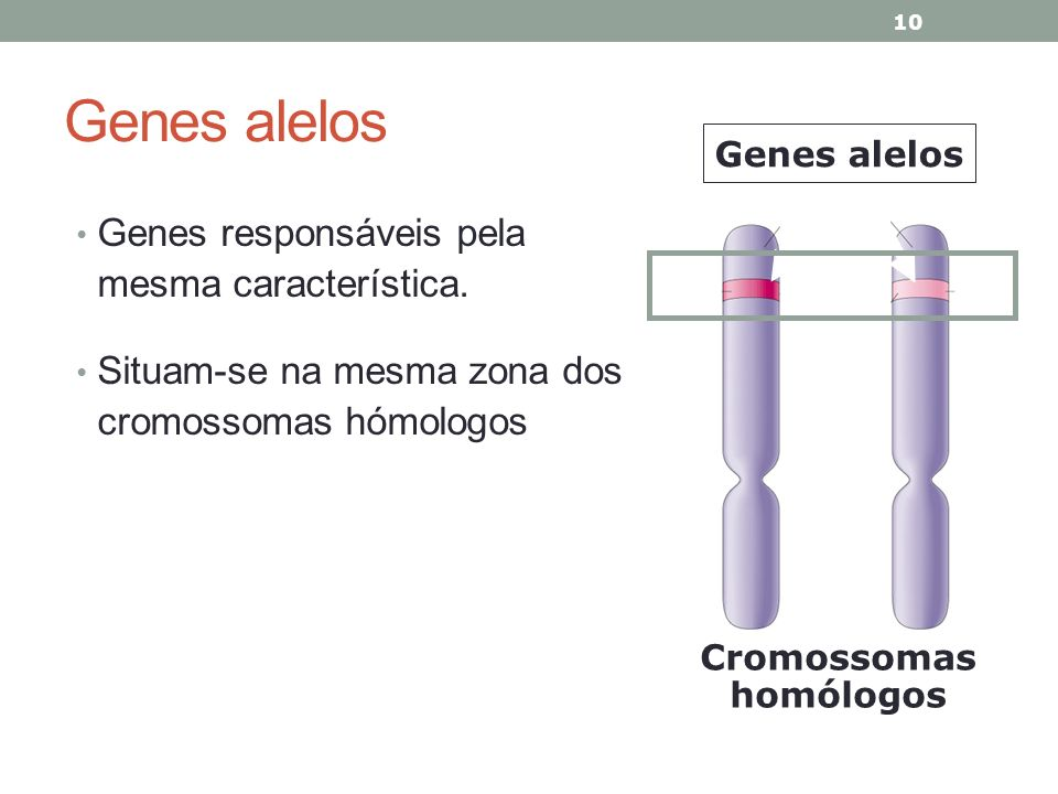 Genes alelos Genes responsáveis pela mesma característica.