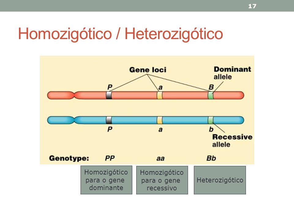 Homozigótico / Heterozigótico 17 Homozigótico para o gene dominante Homozigótico para o gene recessivo Heterozigótico