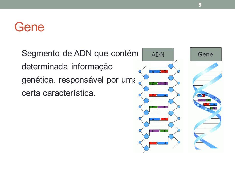 Segmento de ADN que contém determinada informação genética, responsável por uma certa característica. 5 ADN Gene