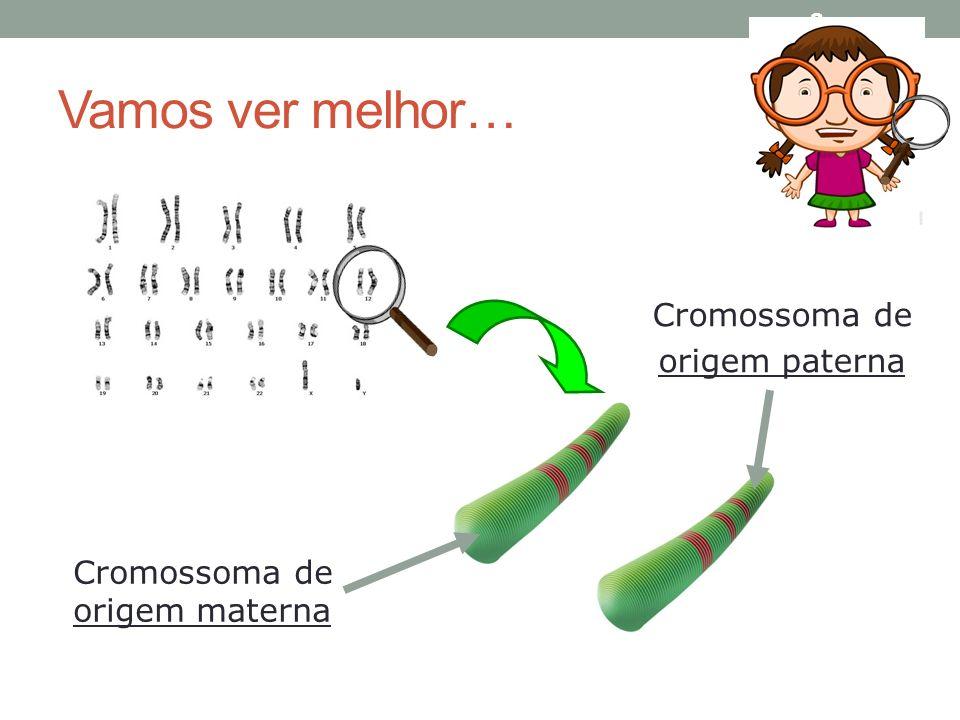Vamos ver melhor… 8 Cromossoma de origem paterna Cromossoma de origem materna