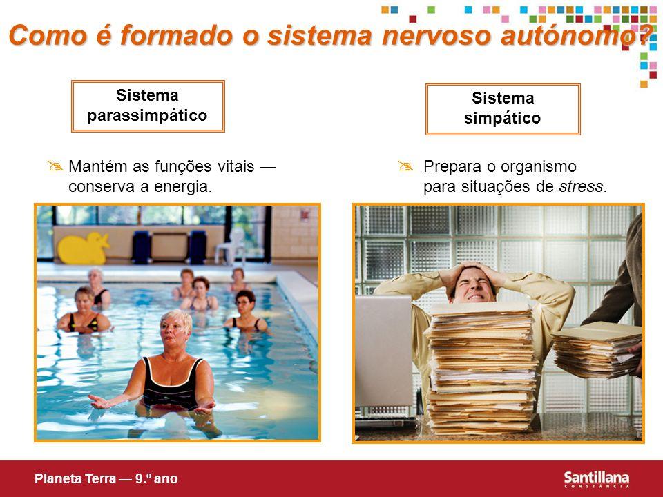 Sistema simpático Sistema parassimpático Prepara o organismo para situações de stress. Mantém as funções vitais conserva a energia. Como é formado o s