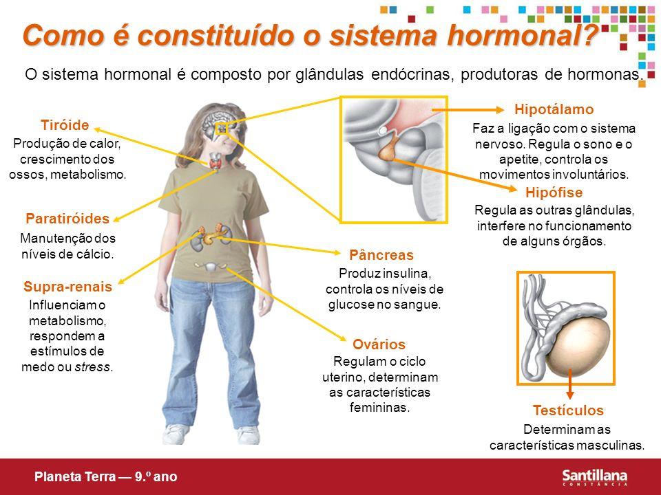 Como é constituído o sistema hormonal? O sistema hormonal é composto por glândulas endócrinas, produtoras de hormonas. Tiróide Produção de calor, cres