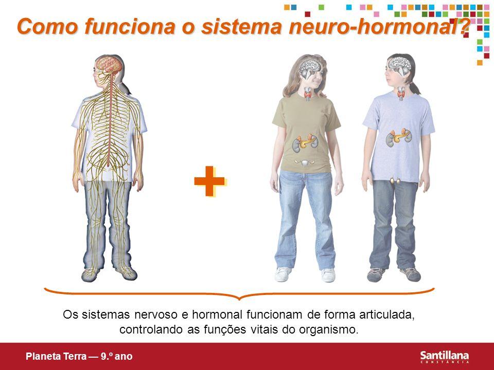 Os sistemas nervoso e hormonal funcionam de forma articulada, controlando as funções vitais do organismo. + + Como funciona o sistema neuro-hormonal?