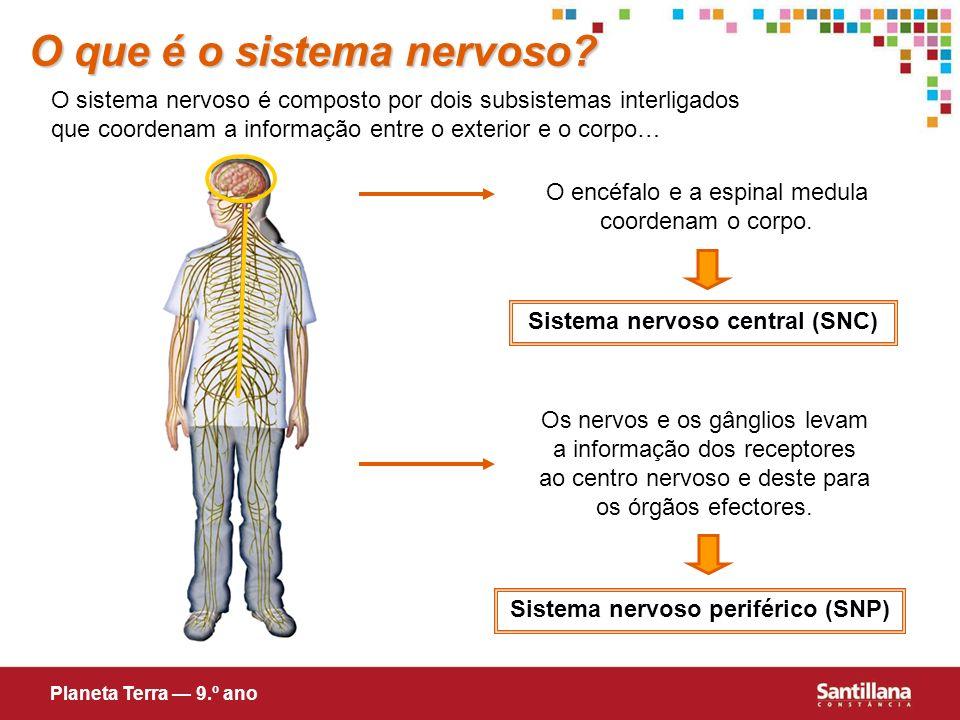O que é o sistema nervoso? O sistema nervoso é composto por dois subsistemas interligados que coordenam a informação entre o exterior e o corpo… O enc