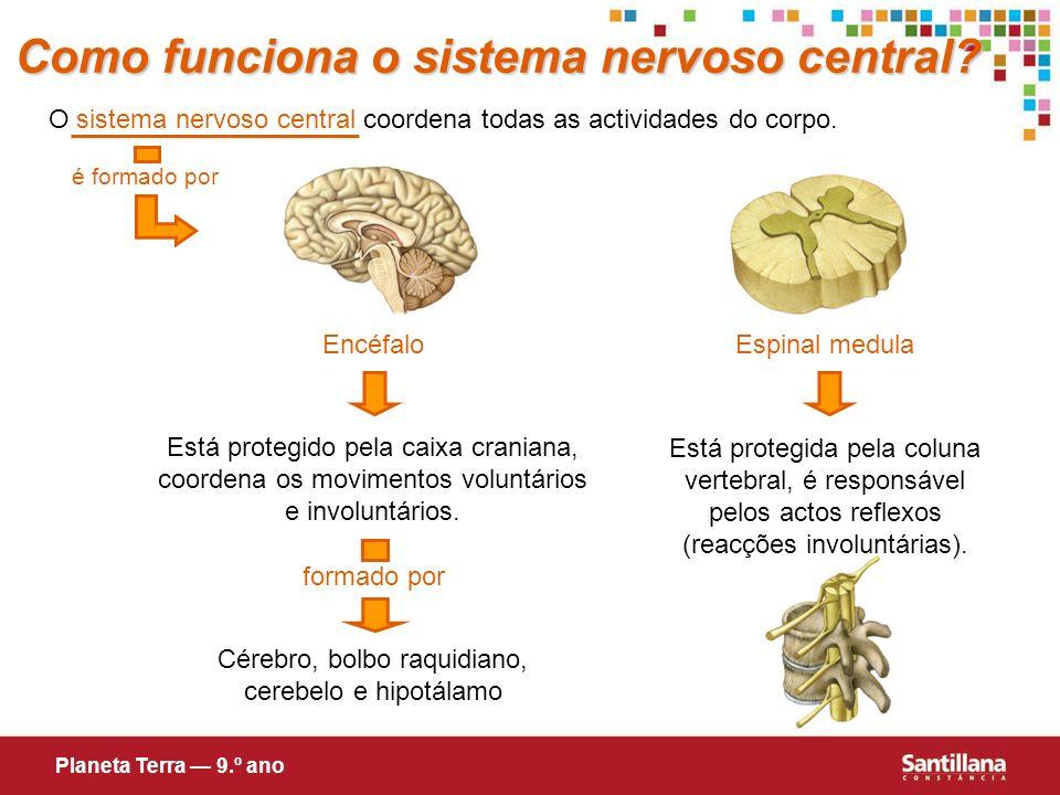 Como funciona o sistema nervoso central? O sistema nervoso central coordena todas as actividades do corpo. é formado por Está protegido pela caixa cra