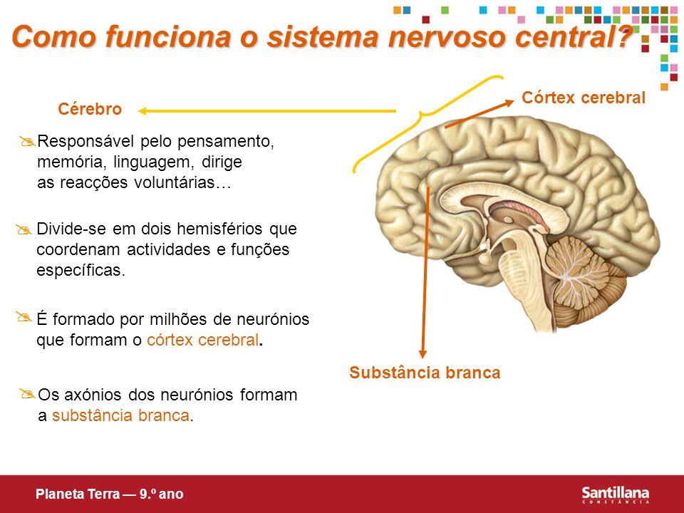 Cérebro Responsável pelo pensamento, memória, linguagem, dirige as reacções voluntárias… Divide-se em dois hemisférios que coordenam actividades e fun