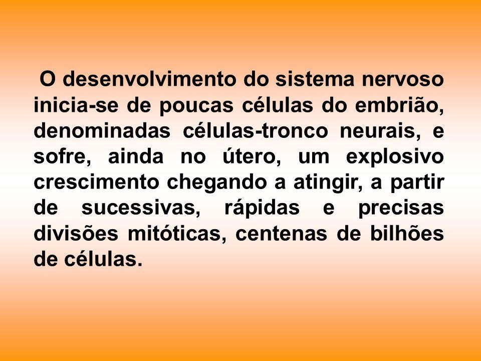 O desenvolvimento do sistema nervoso inicia-se de poucas células do embrião, denominadas células-tronco neurais, e sofre, ainda no útero, um explosivo