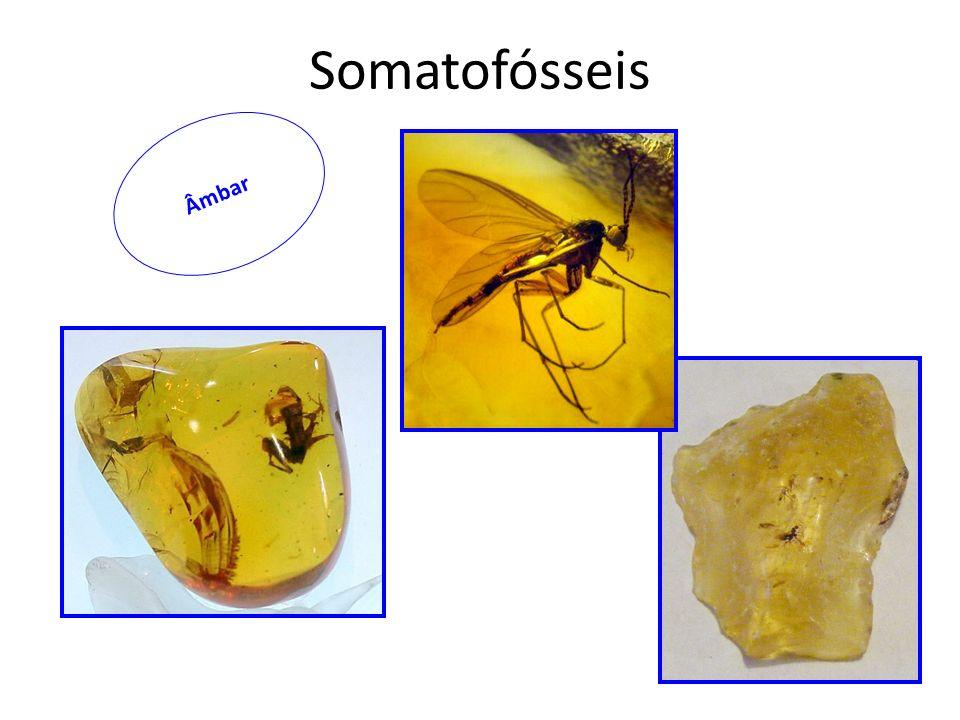 Âmbar Somatofósseis