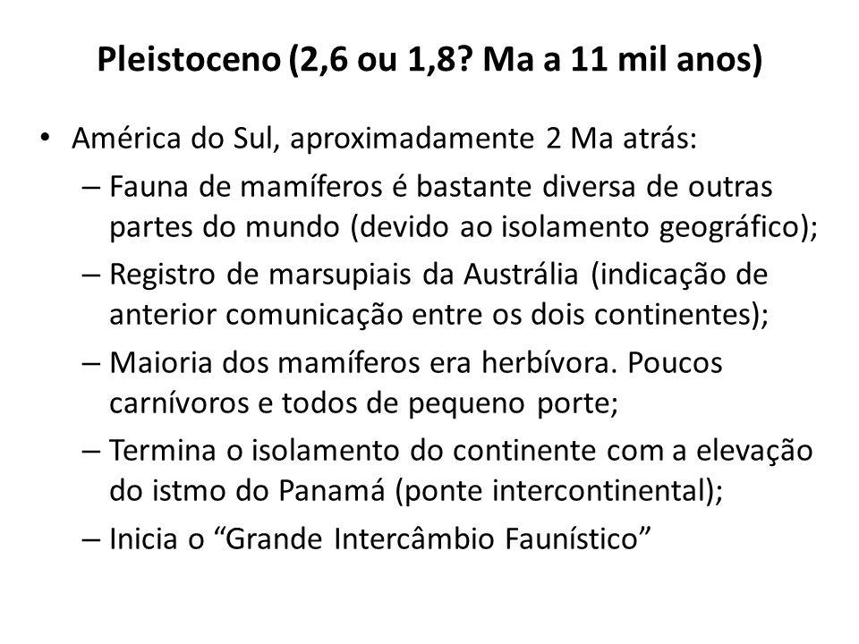 Pleistoceno (2,6 ou 1,8? Ma a 11 mil anos) América do Sul, aproximadamente 2 Ma atrás: – Fauna de mamíferos é bastante diversa de outras partes do mun