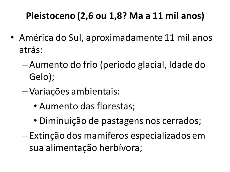 Pleistoceno (2,6 ou 1,8? Ma a 11 mil anos) América do Sul, aproximadamente 11 mil anos atrás: – Aumento do frio (período glacial, Idade do Gelo); – Va