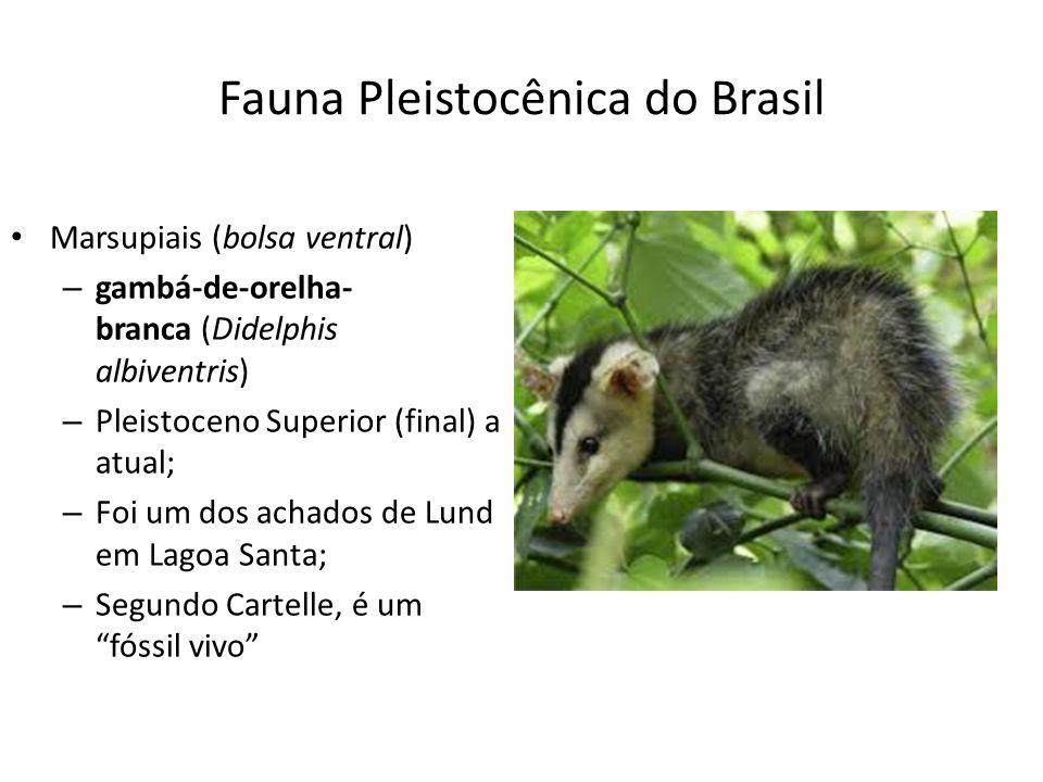 Fauna Pleistocênica do Brasil Marsupiais (bolsa ventral) – gambá-de-orelha- branca (Didelphis albiventris) – Pleistoceno Superior (final) a atual; – F