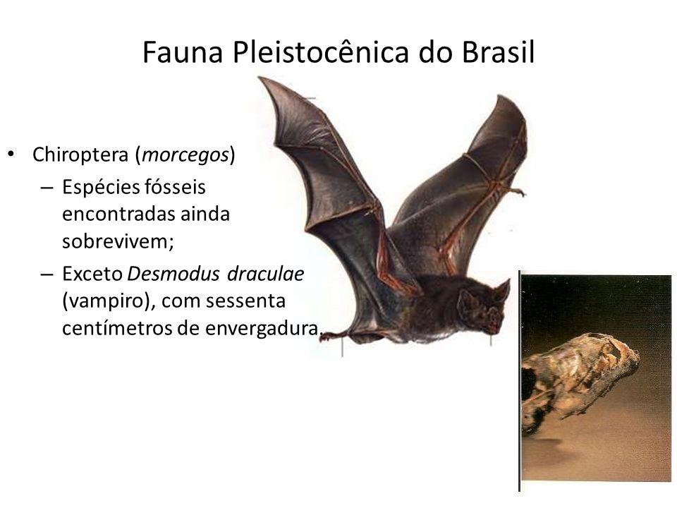 Fauna Pleistocênica do Brasil Chiroptera (morcegos) – Espécies fósseis encontradas ainda sobrevivem; – Exceto Desmodus draculae (vampiro), com sessent