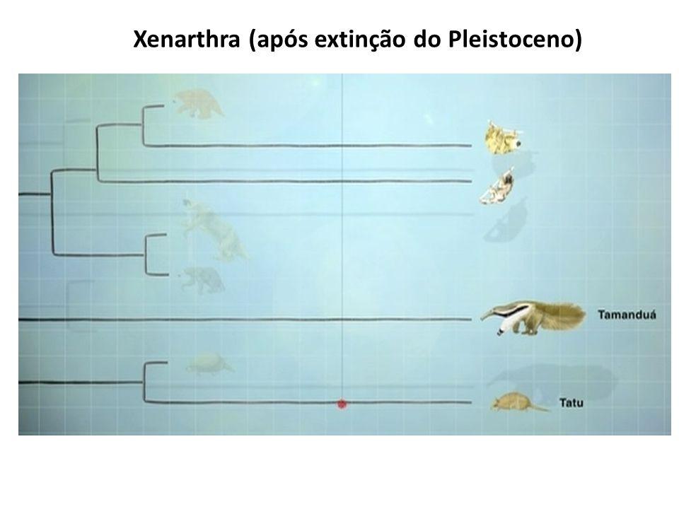 Xenarthra (após extinção do Pleistoceno)