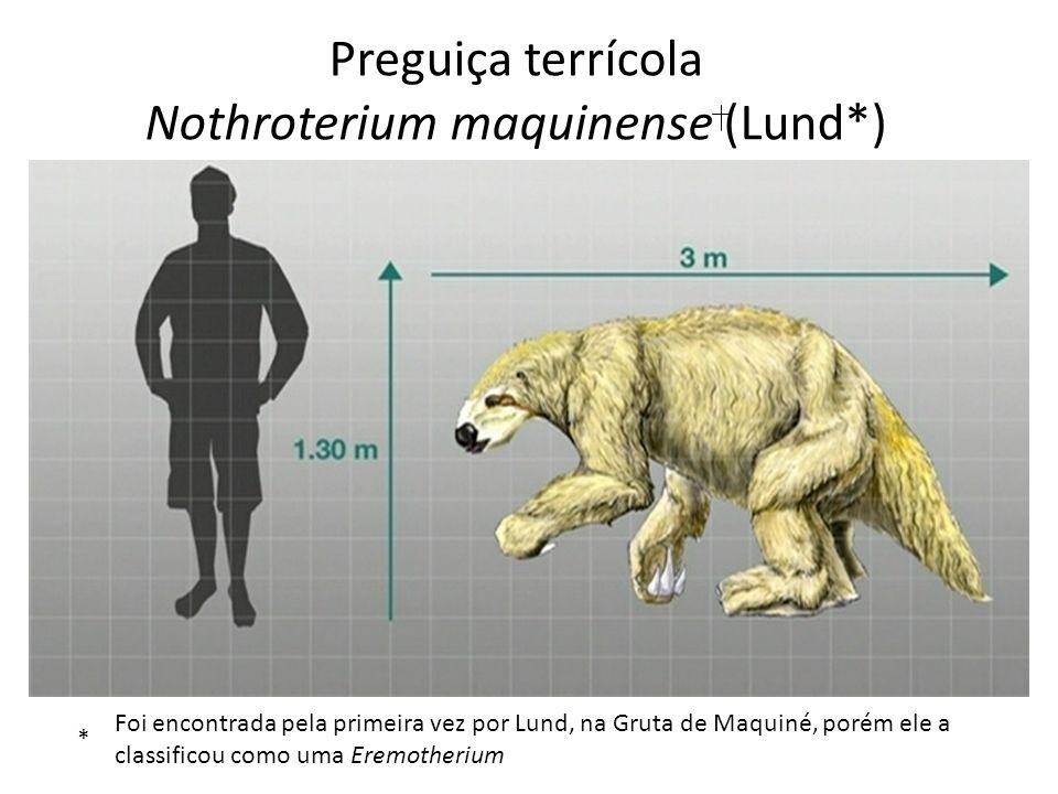 Preguiça terrícola Nothroterium maquinense (Lund*) * Foi encontrada pela primeira vez por Lund, na Gruta de Maquiné, porém ele a classificou como uma
